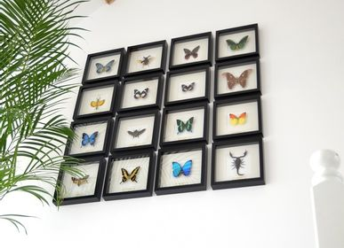 Wall decoration - Butterflies in exclusive black wooden frame - DMW.NU: TAXIDERMY & INTERIOR