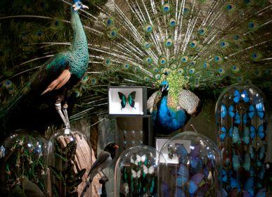 Unique pieces - Blue peacock - DESIGN & NATURE