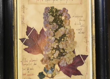 Decorative objects - Herbarium Hydrangea quercifolia Painting - OFFICINA NATURALIS