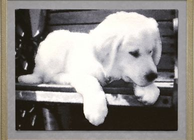 Tapestries - Tapestry Puppy on a bench - NEO TAPIS