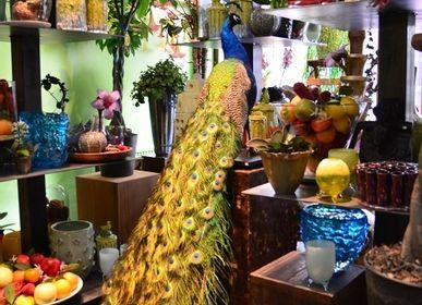 Objets de décoration - Taxidermie paon - DMW.NU: TAXIDERMY & INTERIOR