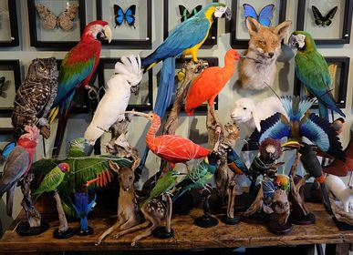 Pièces uniques - Interior design with miracles of nature!  - DMW.NU: TAXIDERMY & INTERIOR