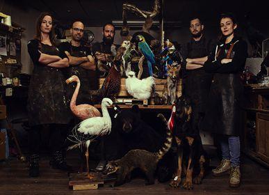Objets de décoration - Artiste en taxidermie et faune sauvage - DMW.NU: TAXIDERMY & INTERIOR