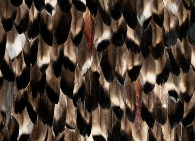 Wall coverings - Folie Feathers - KOKET