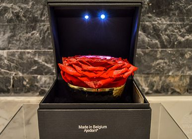 Gifts - Red Diamond Rose - VIVA FLORA