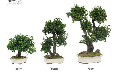 Objets de décoration - Décoration d'objet Bonsai Tenifolium - VIVA FLORA