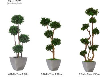Decorative objects - Tenuifolium Trees - VIVA FLORA