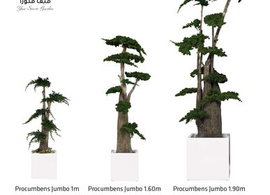 Decorative objects - Prosecumbens Trees - VIVA FLORA