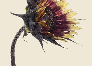 Photos d'art - Impressions botaniques - LILJEBERGS