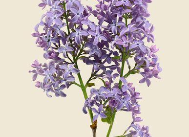 Art photos - Botanical prints - LILJEBERGS