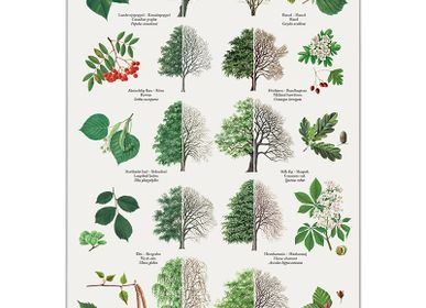 Poster - Nature Posters - KOUSTRUP & CO