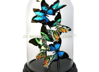Decorative objects - Butterflydome with mix of mounted butterflies - DMW.NU: TAXIDERMY & INTERIOR