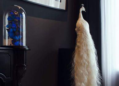Objets de décoration - Taxidermie paon blanc - objet décoratif - DMW.NU: TAXIDERMY & INTERIOR