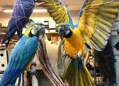 Pièces uniques - Parrot taxidermie - Objet décoratif coloré - DMW.NU: TAXIDERMY & INTERIOR