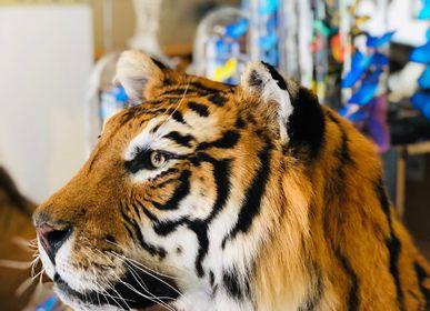 Objets de décoration - Taxidermie Lion & Tigre - Objet décoratif et unique - DMW.NU: TAXIDERMY & INTERIOR