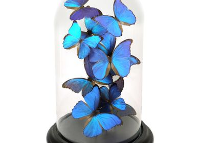 Decorative objects - Butterflydome with blue butterflies - DMW.NU: TAXIDERMY & INTERIOR