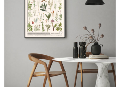 Poster - POSTER I AROMATIC PLANTS - LES JOLIES PLANCHES