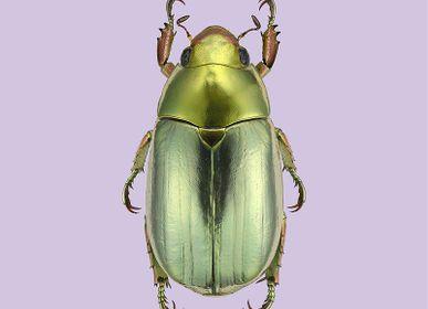 Poster - Pastel bugs - LILJEBERGS