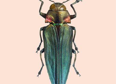 Affiches - Pastel coléoptères - LILJEBERGS
