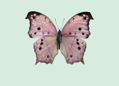 Art photos - Pastel butterflies - LILJEBERGS