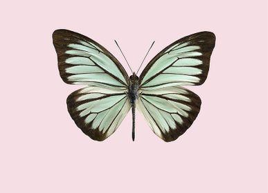 Affiches - Pastel papillons - LILJEBERGS