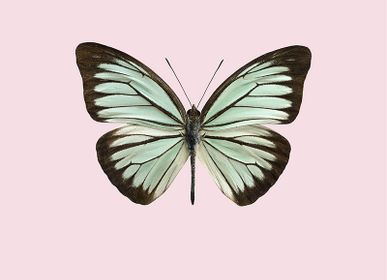 Poster - Pastel butterflies - LILJEBERGS