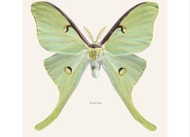 Poster - Butterflies - LILJEBERGS