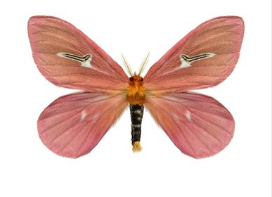 Affiches - Des papillons - LILJEBERGS
