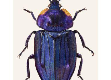 Poster - Beetles - LILJEBERGS