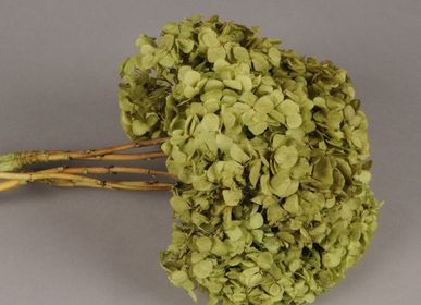 Floral decoration - Green preserved hydrangea - LE COMPTOIR.COM