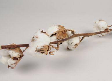 Creative hobbies - Dried cotton flowers branch - LE COMPTOIR.COM