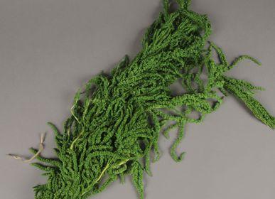 Creative hobbies - Amaranthe Caudatus preserved green - LE COMPTOIR.COM
