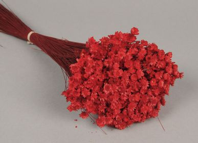 Floral decoration - Dried red Glixia - LE COMPTOIR.COM
