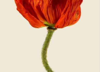 Art photos - Poppies - LILJEBERGS