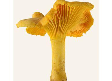 Affiches - Des champignons - LILJEBERGS