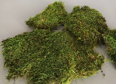 Creative hobbies - natural stabilized moss - LE COMPTOIR.COM
