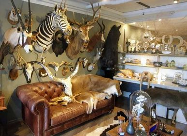 Decorative objects - Taxidermy animals - Decorative items - Interior & Taxidermy - DMW.NU: TAXIDERMY & INTERIOR