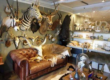 Objets de décoration - Taxidermie animaux - Articles de décoration - Intérieur & Taxidermie - DMW.NU: TAXIDERMY & INTERIOR