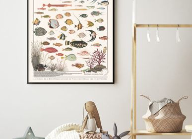 Decorative items - POSTER I EXOTIC FISH - LES JOLIES PLANCHES