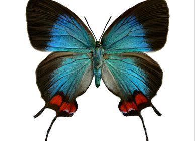 Décoration murale - Des papillons - LILJEBERGS