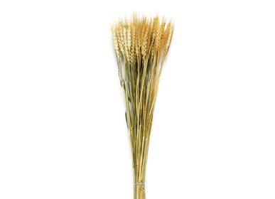 Decorative objects - Wheat natural dried flower bouquet AX70124 - ANDREA HOUSE