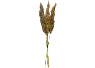 Decorative objects - Natural Pampas natural dried flower 3pcs. AX70130 - ANDREA HOUSE