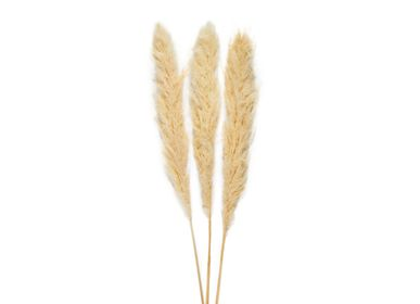 Decorative objects - Cream Pampas natural dried flower 3pcs. AX70132 - ANDREA HOUSE