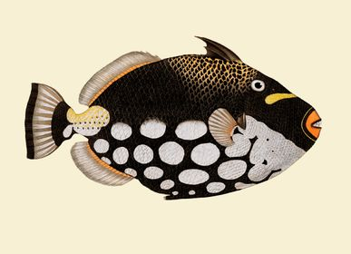 Affiches - Affiche Fish. - THE DYBDAHL CO.