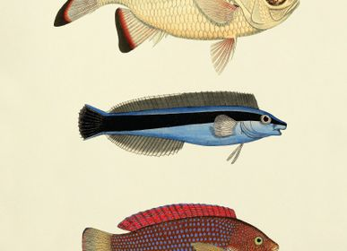 Poster - Poster Fish. - THE DYBDAHL CO.