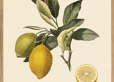 Poster - Poster Fruits, Citronier Commun. - THE DYBDAHL CO.