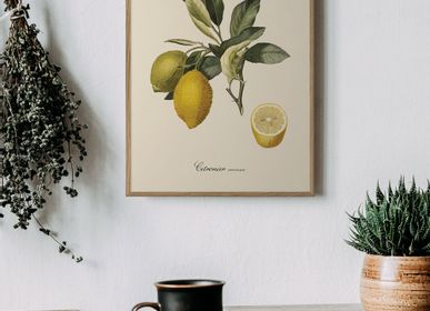 Affiches - Affiche Fruits, Citronier Commun. - THE DYBDAHL CO.