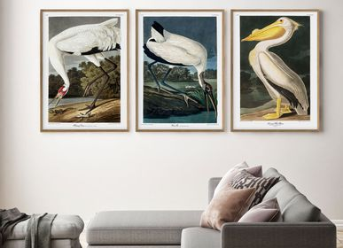 Poster - Poster American Birds, Wood Ibis. - THE DYBDAHL CO.