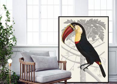 Affiches - Affiche Plumes en Apesanteur, Toucan. - THE DYBDAHL CO.