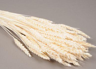 Floral decoration - Wheat, dried, milled - LE COMPTOIR.COM
